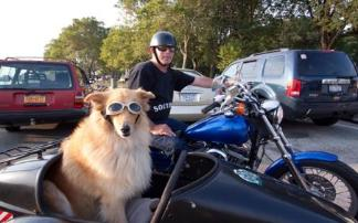 sidecar dog pooch hound photos