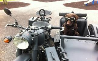 sidecar dog animal doggles ohv m1 super cj750 photo