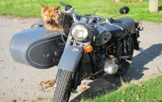 sidecar dog side-car side car dog pooch hound ural side car photo