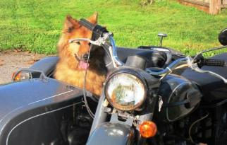 ural photos sidecar dog side car