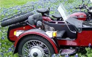 ural sidecar dog photos