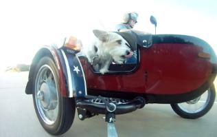 ural 2005 troyka sidecar dog monkey photo photos