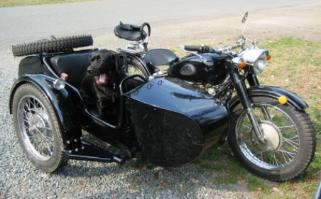 cj750 photos sidecar dog
