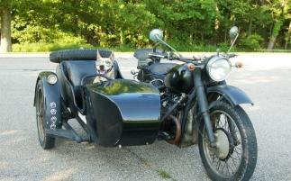 cj750 photo sidecar dog pooch usa