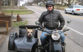cj750 photos sidecar dog hound