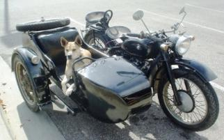 sidecar dog cj750 photos chang jiang750