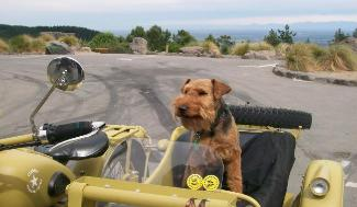 sidecar dog ted welsh terrier nz