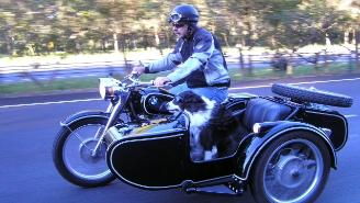 cj750 gold coast australia sidecar dog
