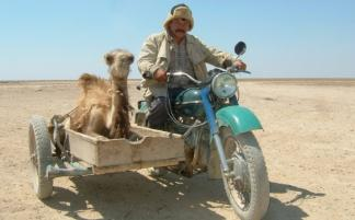 ural sidecar camel photo