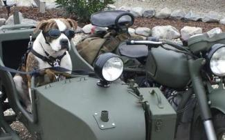 dnepr photo sidecar dog side car